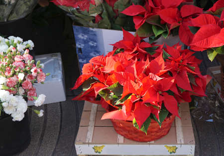 lobster pot: Flame Leaf Flower decoration on Christmas fastival on the floor in the market