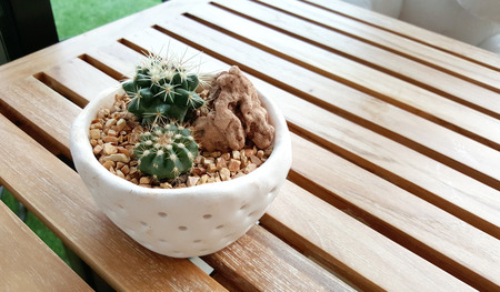 lacks: cactus in the small pot on timber table outdoor