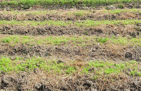 feild: cultivation feild in the farm