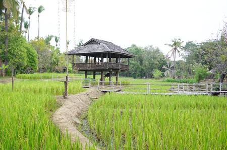 feild: Northen Thai pavilion in the rice feild