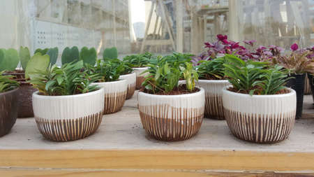 plant pots: small plant pots on wooden table