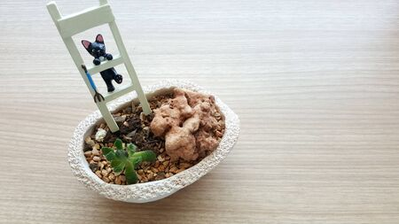 cat toy: succulent plants with cat toy decoration on small pot with timber background