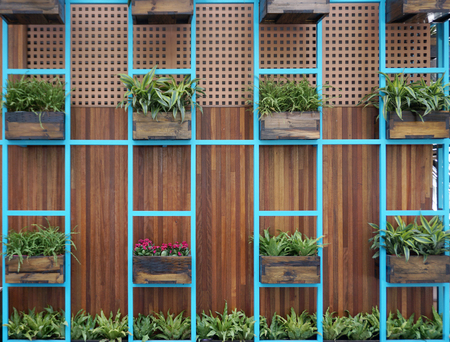 Reclaimed: Fern plants in old timber box on blue shelves with timber plank panel background