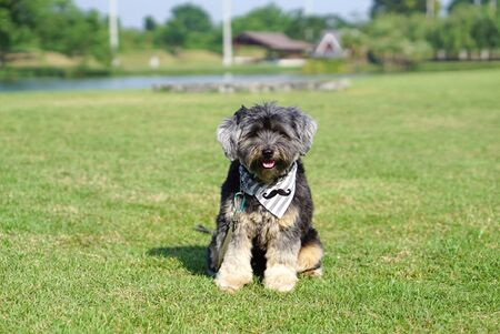 Mixed breed dog wearing bandana sitting on the grass outdoor with nature background