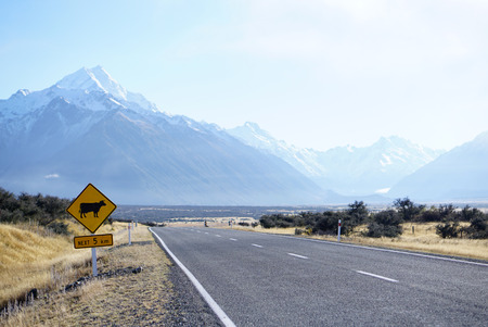 the pampas: Cow road sign in empty road in New Zealand with beautiful mountain renge background