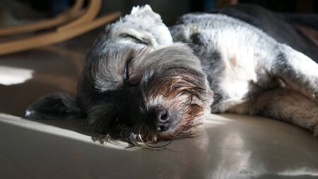 Black color mixed breed dog sleeping with natural light focusing on the nose Фото со стока
