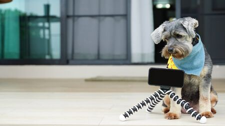 Black color mixed breed dog with colorful bandanas on the floor with Smartphone on tripod