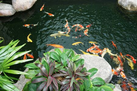 Tropical plants and rock with crap fish pond background in outdoor tropical garden