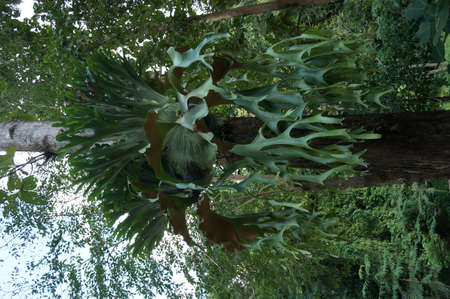 parasite: Beautiful parasite plant tree at tropical forest
