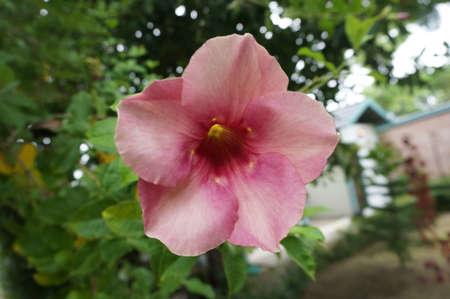 エレガントなピンクの花と葉、クローズ アップ