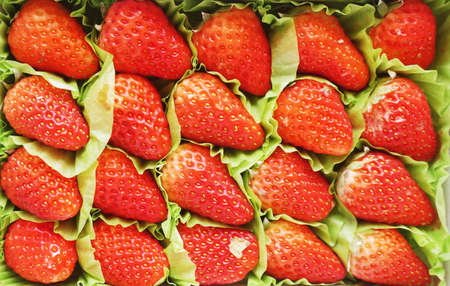 Close up of photo of very fresh harvested strawberries background Stock Photo