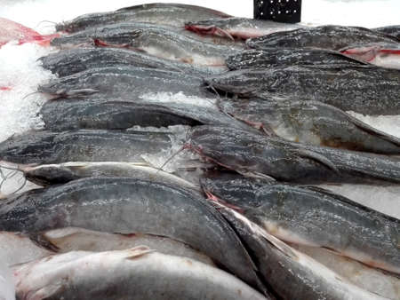 Pieces of fresh Walking Catfish fish ( Clariidae ) on ice for sale in fresh wet market Stock Photo