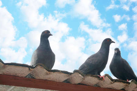 A photo of doves, pigeons standing at the rooftop under the blue sky