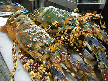 Closeup of fresh lobster on shelf of restaurant at night market.