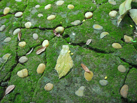 A photo of texture of Gray Stone Pavement with Green Moss; Old Stone pavement background with green color of thallophytic plant of moss, close up Stok Fotoğraf