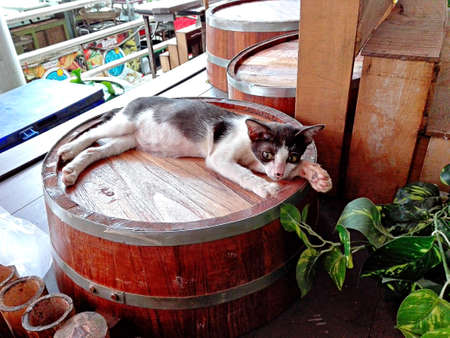 A photo of sleepy cat laying on a wooden bucket of water, close up