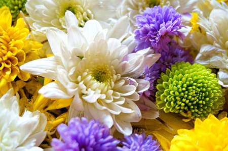 A photo of group of various flowers (Chrysanthemum, Marigold, etc), various color in the background, close up Stok Fotoğraf