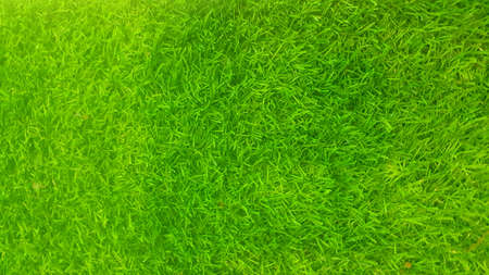 A photo of artificial green grass texture and background, close up