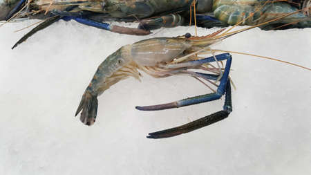 A photo of raw Giant freshwater prawn ( Macrobrachium rosenbergii ), seafood on ice in fresh market, close up, top view