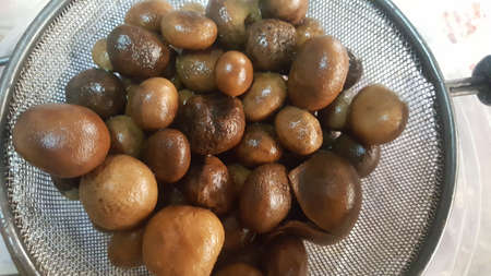 Boiled Puff Ball Mushrooms (hygroscopic earthstar, the barometer earthstar, the false earthstar)