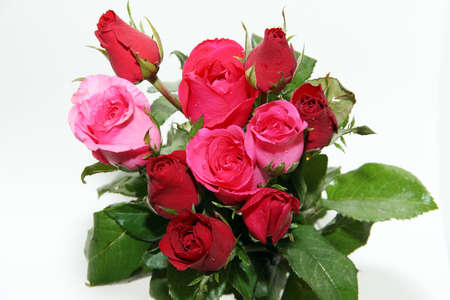 Red and pink roses and white background Stock Photo - 11880425