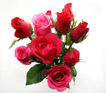 Red and pink roses and white background Stock Photo - 11880416
