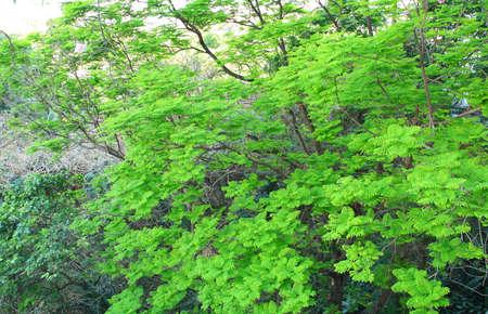 Tree Stock Photo - 12084250