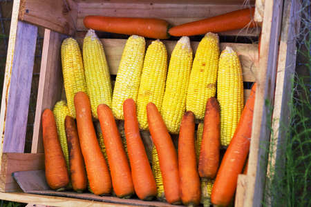 carrots and corn photo