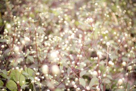 flower and gardening