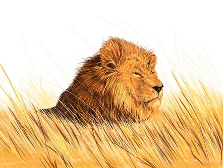 牧草地のライオン