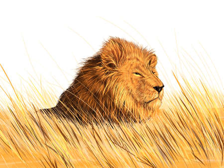 Lion in the meadow  Illustration