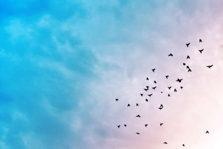 Birds flying in the blue sky . photo