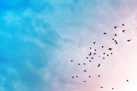 Vogels vliegen in de blauwe lucht.