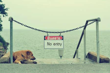 velvet rope barrier: Sleeping dog guarding the entrance