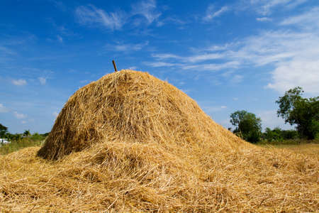 Rice straw with blue sky in farm Imagens