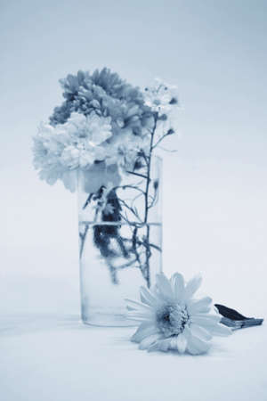 monotone: Bouquet of Flowers in a Glass on monotone color Stock Photo