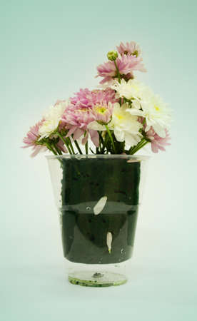 Bouquet of Flowers in a Glass on Pastel background photo