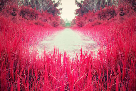 Red and pink meadow.Streets filled with grass. photo