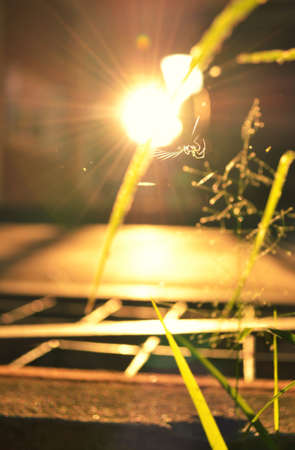 Spiders are woven into the sunset. photo