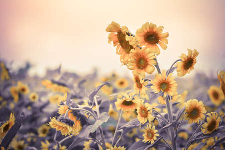 sunflowers and bee in Vintage and pastel style. photo