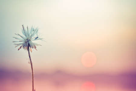 Dandelions flower in Vintage and pastel style.