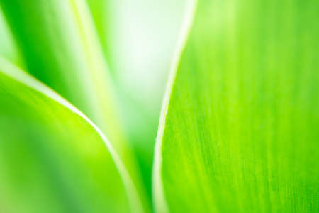 blur and soft focus of grass leaf with green color background