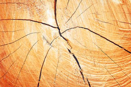 ヴィンテージの色と背景の成長リング木の質感 写真素材