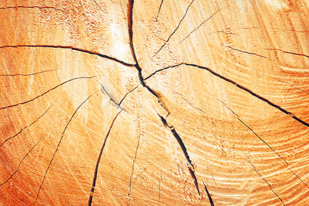 tronco: textura de los anillos de crecimiento de �rboles para el fondo con el color de la vendimia