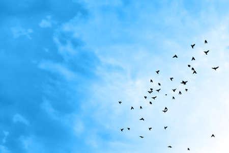 bandada pajaros: Pájaros que vuelan en el cielo azul. Foto de archivo