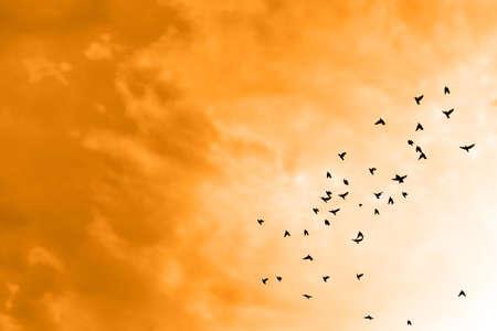 birds  silhouette: Birds flying in the blue sky .
