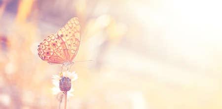 빈티지 색조와 정원에서 꽃에 나비