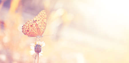 butterfly on flowers in the garden with vintage color tone