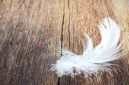 white feather on wood with nature background