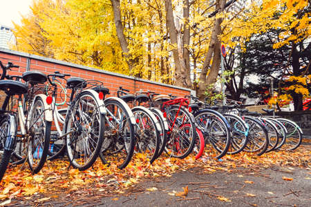 Bicycle in Autumn season with tree and leaves in Japan Stock Photo
